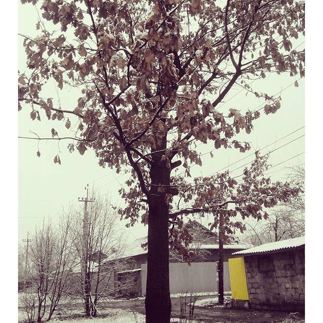 Переплетение трех времен. Стоит дерево в осеннем наряде, кругом снег, а за окном весна... Фото @alinka_chernyaeva Мы вконтакт...