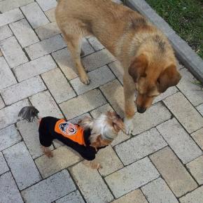 Два мира, два образа жизни #Шахтер #собака #встреча #dogs #Shakhtar #Donetsk #Ukraine #govoritdonetsk...