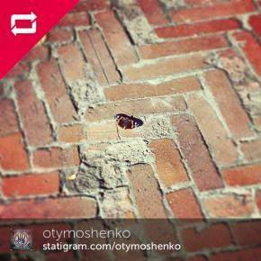 Еще один кирпич в стене #Бабочка #Butterfly #FromDonetsk