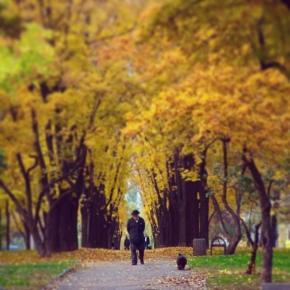 #донецк #осень #autumn #donetsk #govoritdonetsk #fromdonetsk