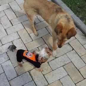 #Встреча двух миров, которые два образа жизни #Донецк #Украина #Шахтер #Собака #Футбол #football #dog #shakhtar #govoritdonet...