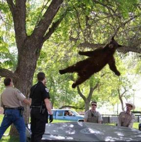 Когда сил уже нет и кажется, что ты падаешь, может оказаться, что все совсем не так и ты летишь #медведь #батут #США #fromdon...