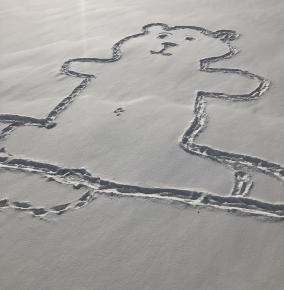В Монреале на снегу изобразили добродушного медведя.  Теперь главная забота прогрессивной общественности - выяснить, как ему ...