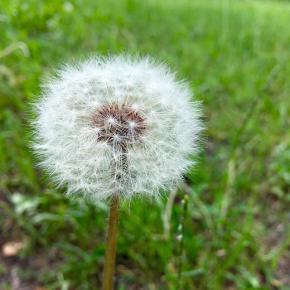 #flower #summer #mycity_donetsk #donetsk #fromdonetsk #instadonetsk #типичныйдонецк #grass