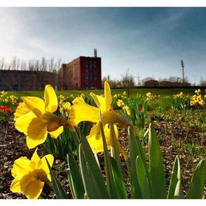 #flowers #nature #spring #season #mixapp #sky #instadonetsk #fromdonetsk #mycity_donetsk #i_love_donetsk #типичныйдонецк #iph...