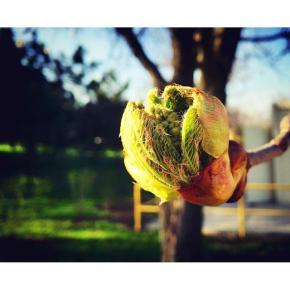 #spring #leaves #green #nature #iphonesia #iphoneonly #iphoneography #streetphoto #streetphotography #street #season #instado...