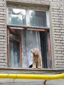 #Любопытство - так назвал это #фото его #автор Геннадий #Казаков, но кажется, что это всё-таки #Ожидание. Как думаете? #Донец...