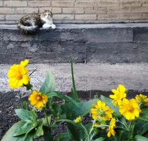 """""""Однажды вечером"""", - назвал это #фото его автор Сергей #Голоха #Донецк #котики #fromdonetsk #Donetsk..."""