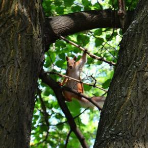 Чё уставился - белочку не видел?! #Фото by Сергей #Голоха #Donetsk #fromdonetsk #белка #squirrel #Донецк...