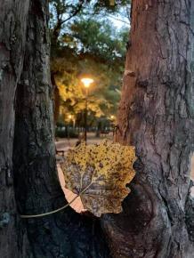 Без шести осень... - назвала сет #фото его автор Елена #Вишневская #Донецк #Кальмиус #fromdonetsk #Donetsk...