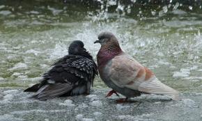 Pas de deux у фонтана. Фото Геннадия Казакова #fromdonetsk